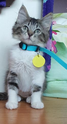lucy kitten